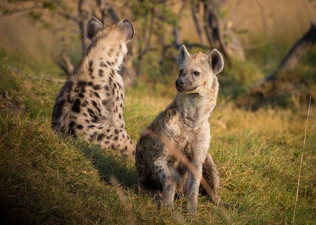 About Achieve Global Safaris Ltd