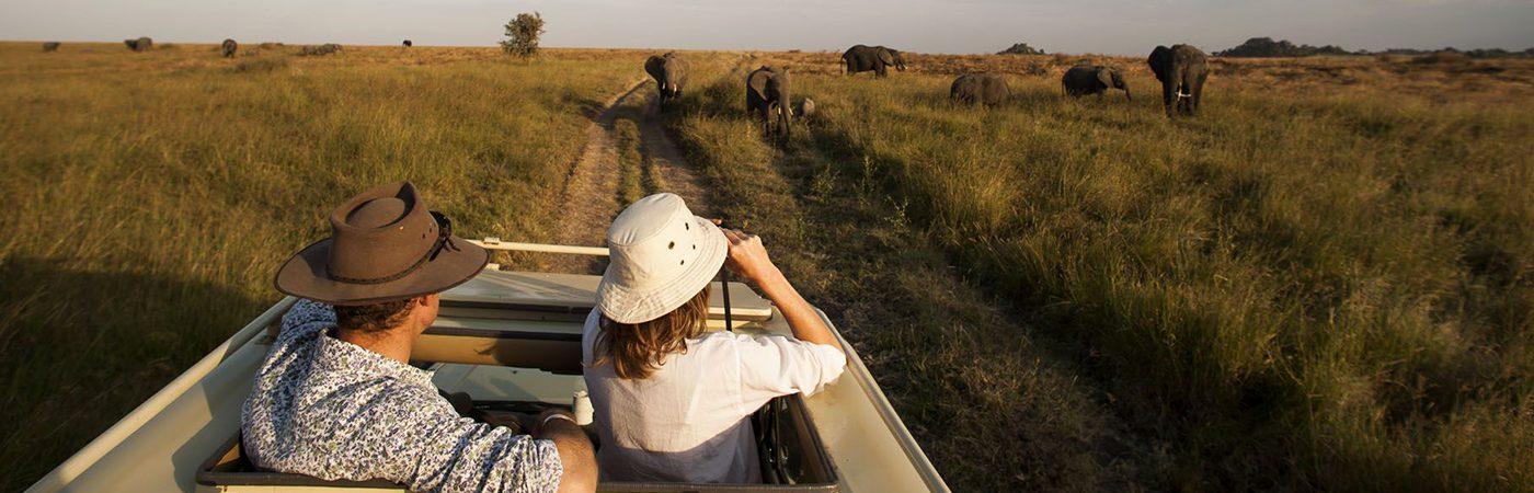 African Safaris Tours