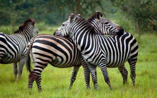 2 Days Lake Mburo Wildlife Tour