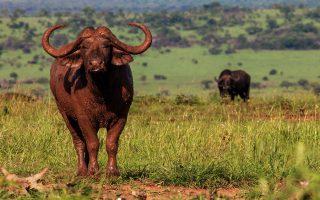 3 Days Kidepo Flying Wildlife Safari