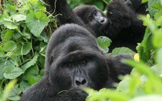 4 Days Bwindi Gorillas and Lake Bunyonyi
