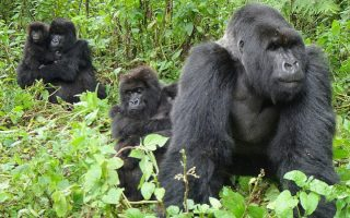 4 Days Double Gorilla Trekking