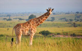 5 Days Uganda Wildlife Safari
