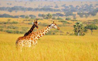 18 Days Discover Uganda Safari