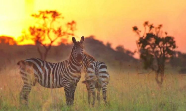 5 Days Kidepo National Park Tour