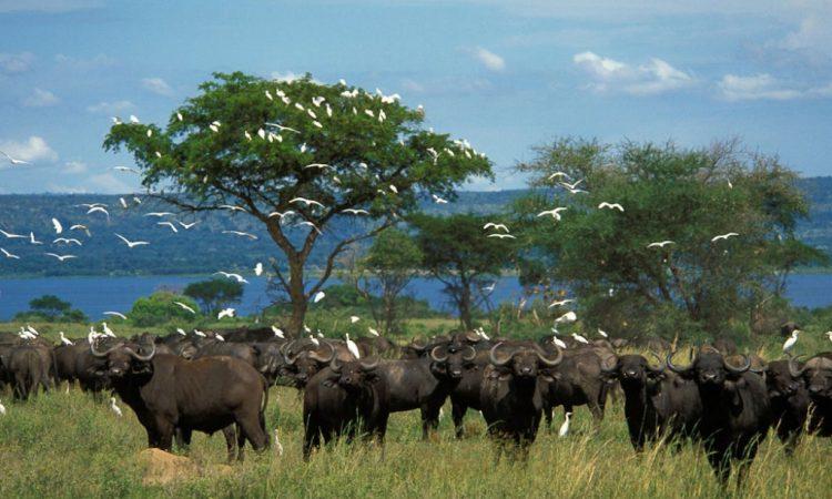 7 Days Uganda Family Safari